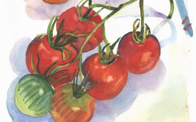 Almost All Red Tomato Cluster – watercolor still life painting by Frank Costantino