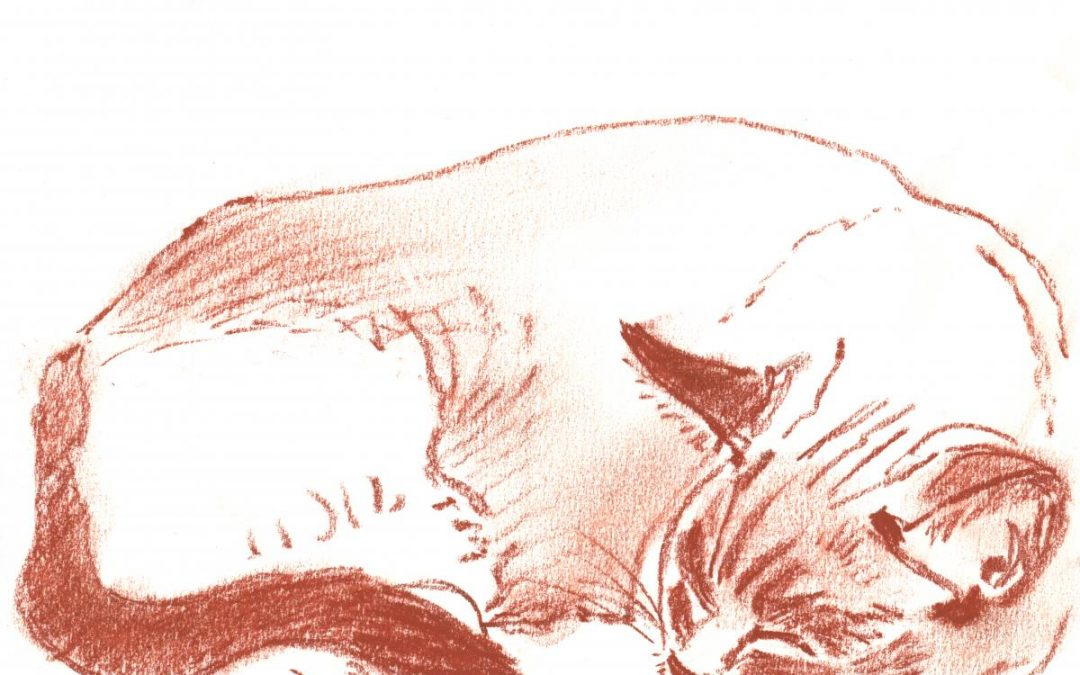 Bootsie- Chalky – drawing of a cat sleeping