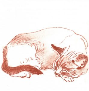 Bootsie- Chalky - drawing of a cat sleeping by Frank Costantino