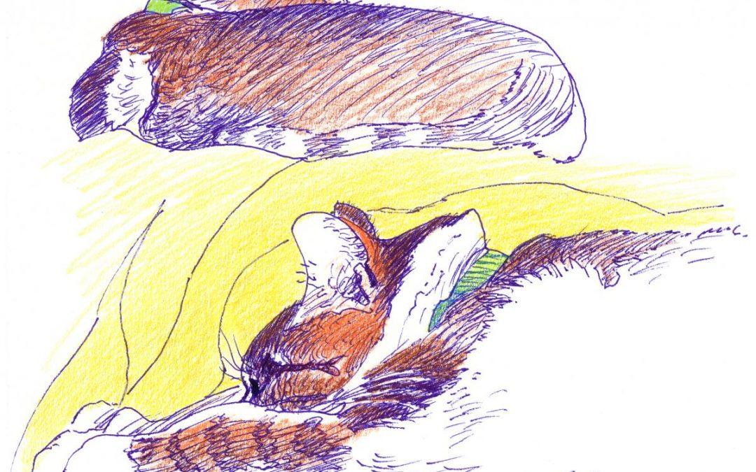 Feline Lie-In – color drawing of cats
