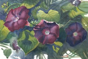 Glories' Brief Etude - watercolor floral painting by Frank Costantino