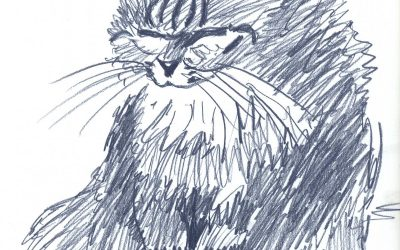 Mim Bluer – drawing of a cat