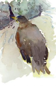 Orphan Swallow - watercolor painting of bird by Frank Costantino