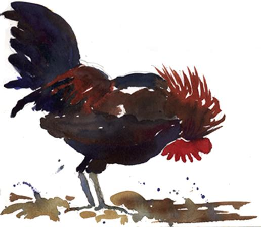 Rooster - watercolor painting of rooster in farm yard by Frank Costantino