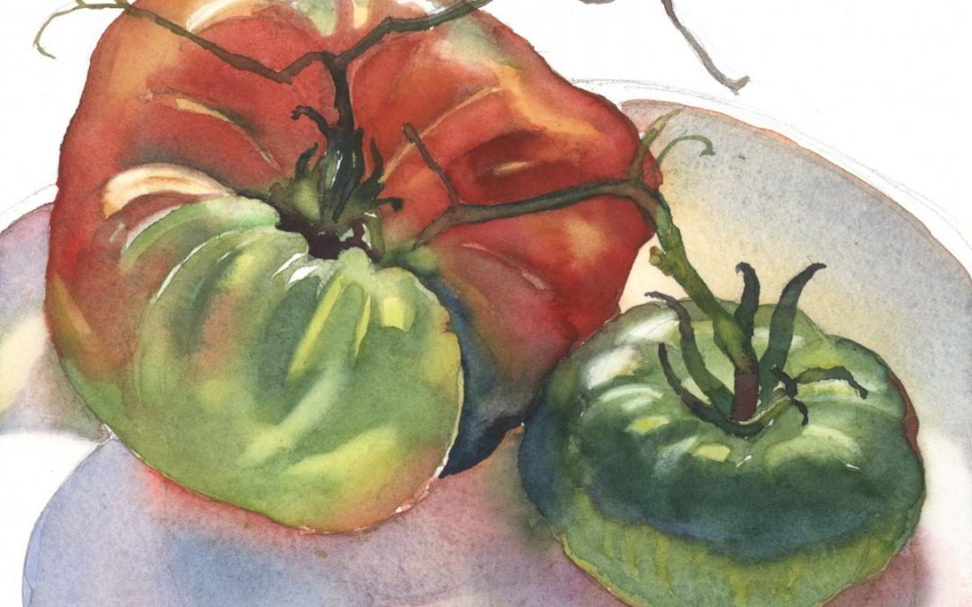 Season's Last Tomatoes – watercolor still life painting