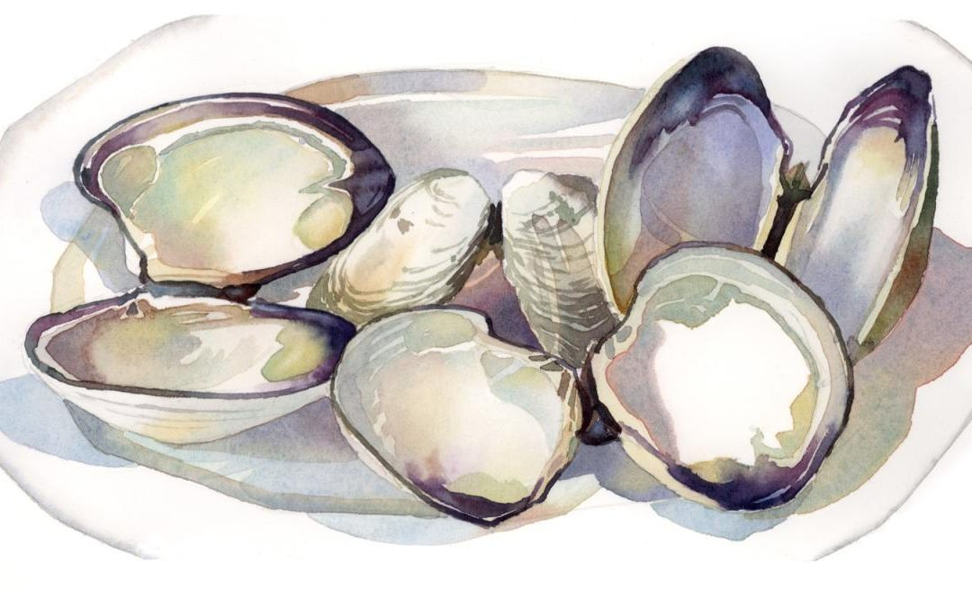 Shells After Dinner - watercolor still life painting with sea shells by Frank Costantino