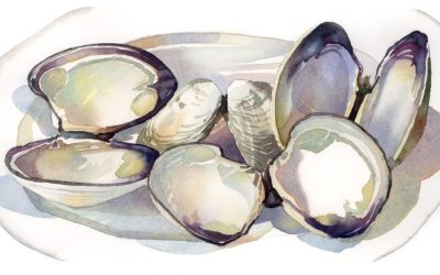 Shells After Dinner – watercolor still life painting with sea shells