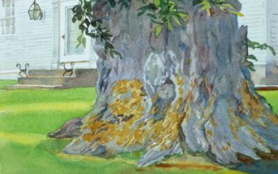 Nature & Man, Elm On Spring Street – en plein air watercolor landscape painting with tree